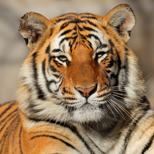 10 Tips to Tame Your Stress Tiger