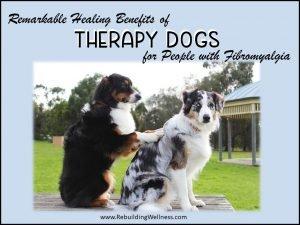 Therapy Dogs Fibromyalgia